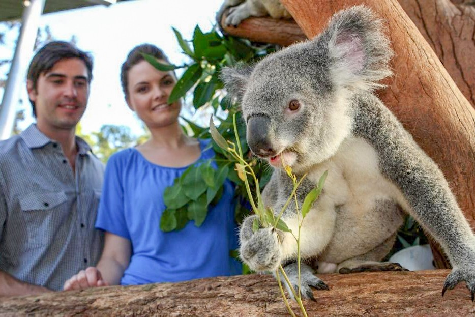 Sydney Taronga Zoo Ticket and Wild Australia Experience