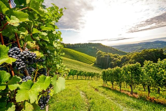 Wijnreis naar de Kaukasus van Azerbeidzjan naar Georgië
