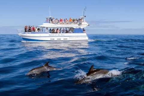 Gran Canaria: Bootsfahrt mit Delfin-Beobachtung