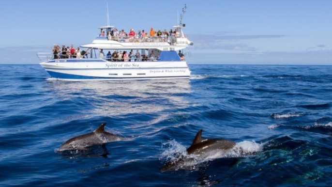 From Puerto Rico de Gran Canaria: Dolphin Watching Cruise