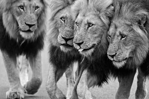 Kruger National Park: Private Morning Game Drive