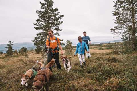 From Tromso: Nordic Husky Hike