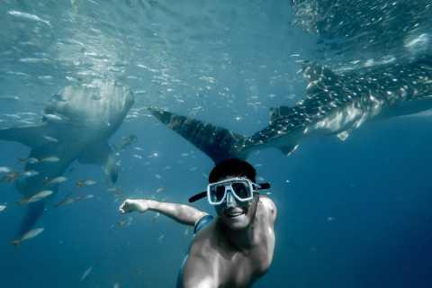 Oslob Whale Shark Swimming and Kawasan Falls Canyoneering
