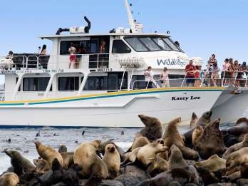 Philip Island: Seal Watch Cruise