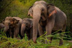 Phuket: Excursão Ética Interativa Santuário do Elefante