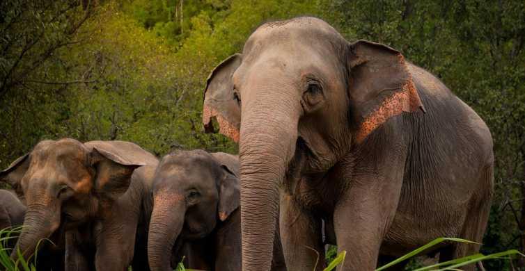 Phuket: Ethisches Elefanten-Schutzzentrum − Interaktive Tour