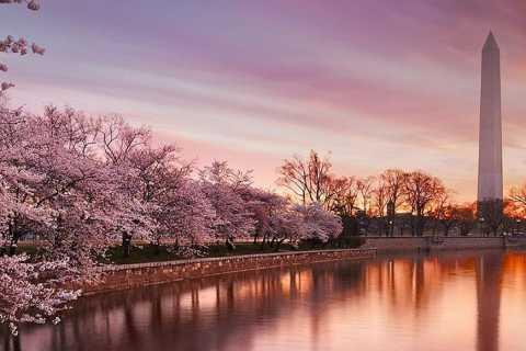 Washington: Cherry Blossom Tour