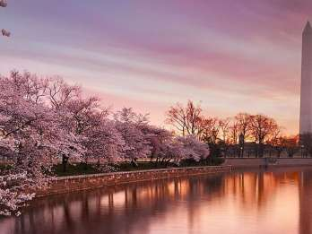 Washington: Kirschblüten-Tour. Foto: GetYourGuide