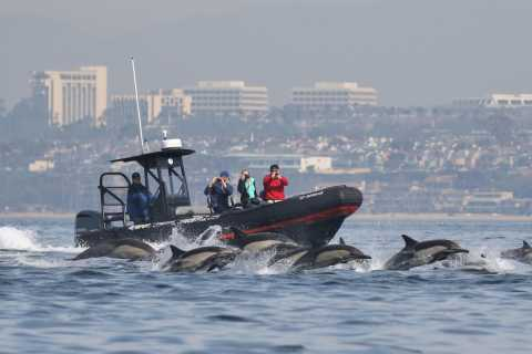Newport Beach: Ultimate Whale Watching Adventure