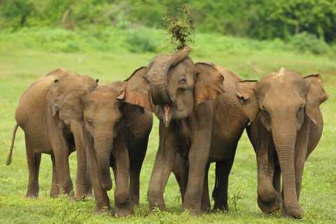 From Colombo: Udawalawa National Park Wildlife Safari