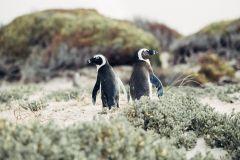 Excursão de 1 Dia à Península do Cabo e Colônia de Pinguins