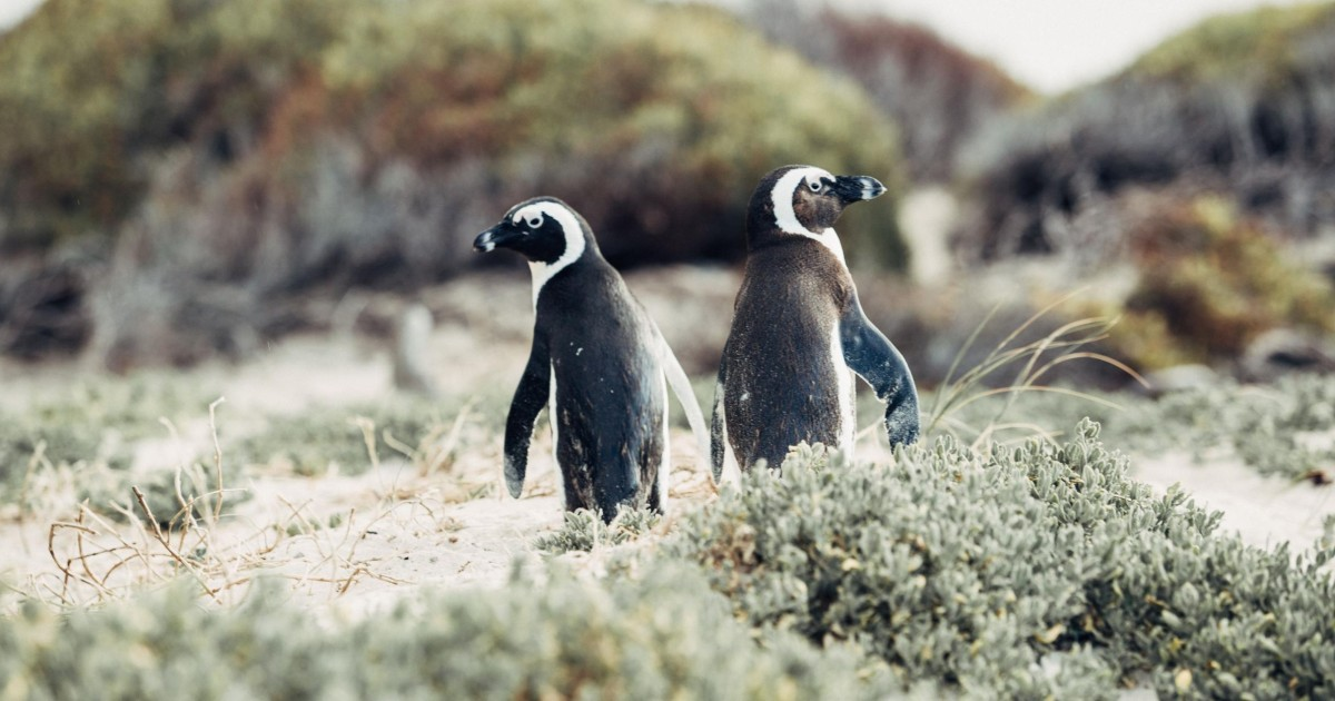 Cape Peninsula and Penguin Colony Full Day Guided Tour