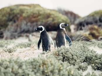 Kap-Halbinsel und Pinguin-Kolonie: Ganztägige Gruppentour