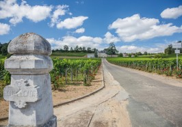 What to do in Bordeaux - From Bordeaux: Full-Day St Emilion Wine Tasting Tour