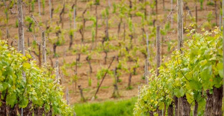From Colmar: Full-Day Alsace Wine Tasting Tour