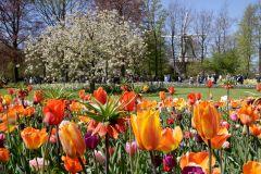 De Amsterdã: Entrada Rápida no Keukenhof e Traslado