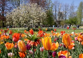 What to do in Amsterdam - From Amsterdam: Fast-Track Keukenhof Ticket and Transfer