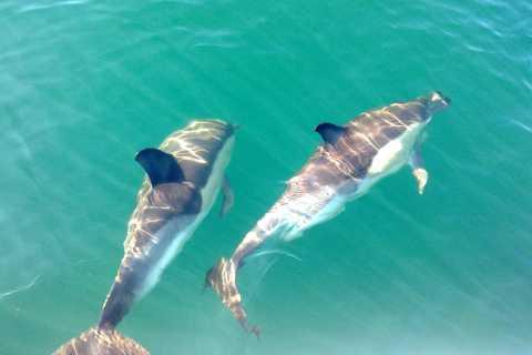 Cabanas de Tavira: tour in barca con osservazione dei delfini