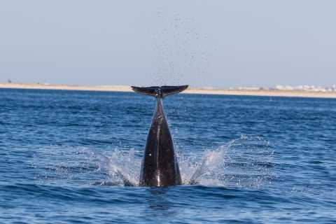 Olhão: Dolphin Observation
