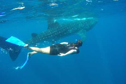 Riviera Maya: Whale Shark Encounter