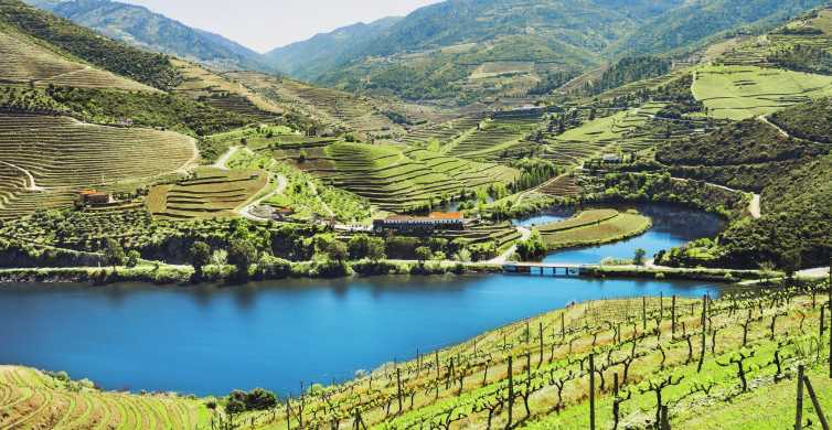 Full-Day Douro Wine Tour with Lunch and River Cruise