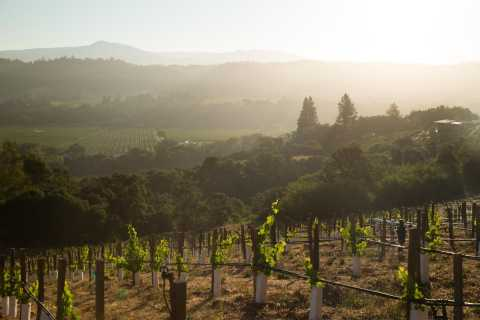 San Francisco: Napa and Sonoma Tour with Winery Visits