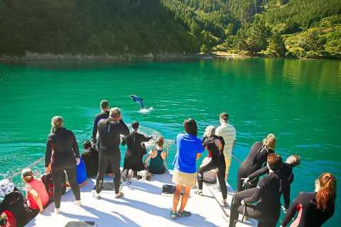 Picton: Dolphin Watching & Island Wildlife Sanctuary Cruise