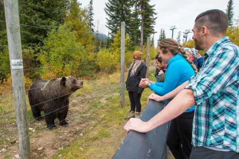 Banff: Grizzly Bear Refuge Tour with Lunch