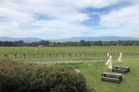 Mornington Peninsula Winery Bus Tour with Lunch & Wine