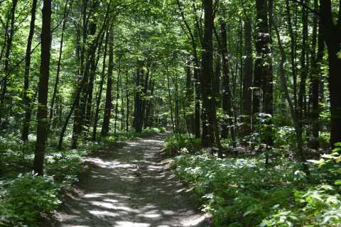 Kiev: Holosiivsky Forest & Kitaevskaya Hermita Hiking Tour