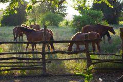 Kingston: passeio a cavalo e excursão de natação