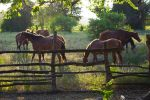 Kingston: Horseback Ride and Swim Excursion