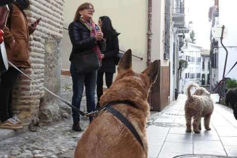 Granada: Guided Realejo Tour with Pets