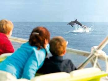 Mallorca: Sonnenaufgang auf dem Wasser & Delfin-Beobachtung
