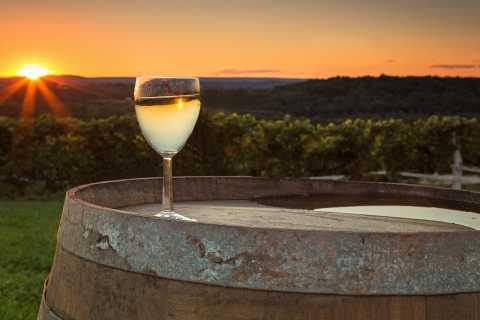 Vipava Valley Wine Tasting Experience