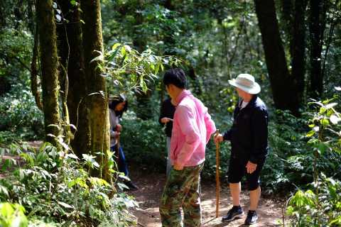 Tour with Hike in Kiew Mae Pan Natural Trail from Chiang Mai