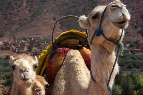 From Marrakech: Camel Ride & Hiking Tour in Atlas Mountains