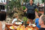 Daintree Rainforest Full-Day Tour with Buffet Breakfast