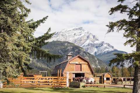 Banff National Park: 1-Hour Bow River Horseback Ride