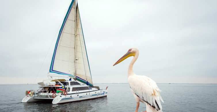 Walvis Bay: Marine Big 5 Luxury Catamaran Tour