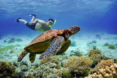 Cebu: Moalboal Swimming with Sardines & Dolphin Watching