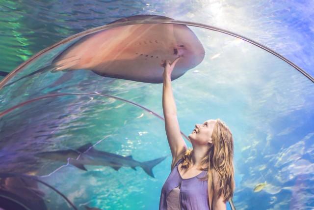 Dubai Aquarium & verdieping 124 Burj Khalifa: combitickets