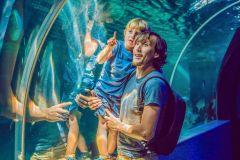 Aquário de Dubai e o Zoológico Subaquático: Bilhete Explorer