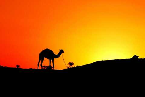 Agadir: Camel or Horse Ride at Sunset