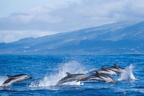 Sao Miguel: Western Tour with Whale Watching and Lunch