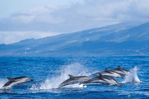 Sao Miguel: Central Tour with Whale Watching and Lunch