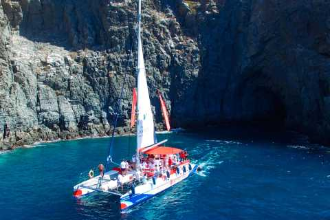 Tenerife: 5-Hour Whale and Dolphin Watching Experience