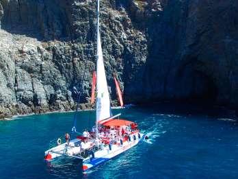Teneriffa: Wal- und Delfin-Beobachtungstour