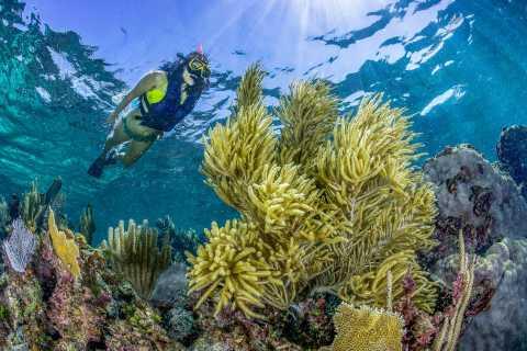 Cancun: Puerto Morelos National Reef Park Snorkel Adventure