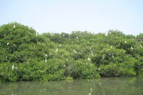 Veracruz: City Tour With Mandinga Boat Ride
